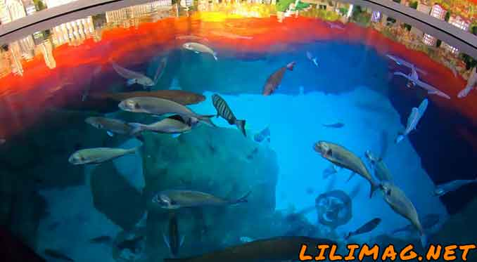جاذبه گردشگری استانبول که باید حتما بینید، آکواریوم فلوریا استانبول(Istanbul Aquarium)